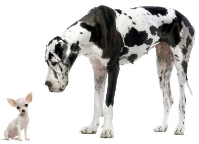 The Most Comprehensive And Best All Breed Dog Training In Denver Co