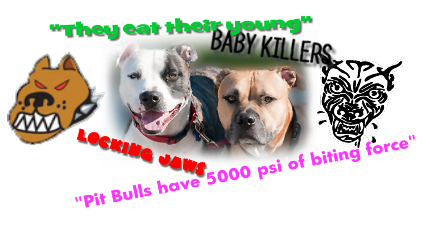pit bull misconceptions and facts And that's the biggest misconception is that the term pit bull refers to one  dogs  did not die very often, and in fact it was kind of rare for a dog to.